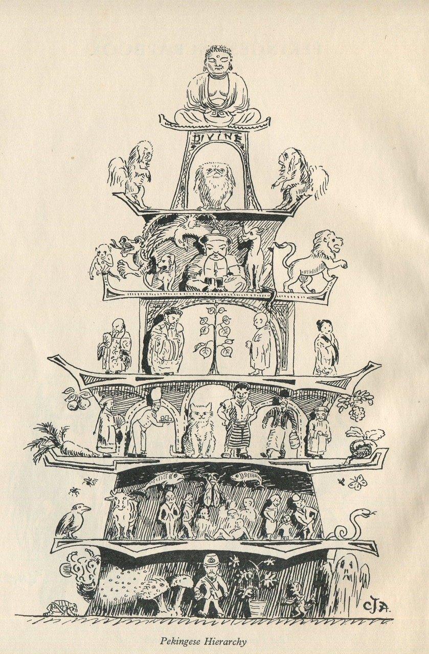 _'Pekingese Hierarchy'_by_C.J._Allport_the_frontispiece_for_elsa_howe_and_ellic_howe's_Pekingese_scrapbook Forrás: chinaheritage.net