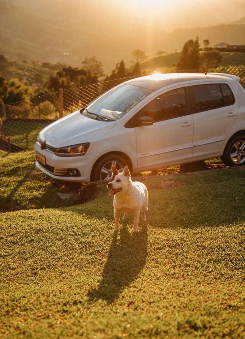 A kutyának meg kell várnia, hogy engedélyt kapjon a kocsiból kiszállásra