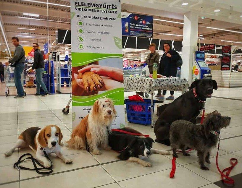 Adomány gyűjtő kutyák