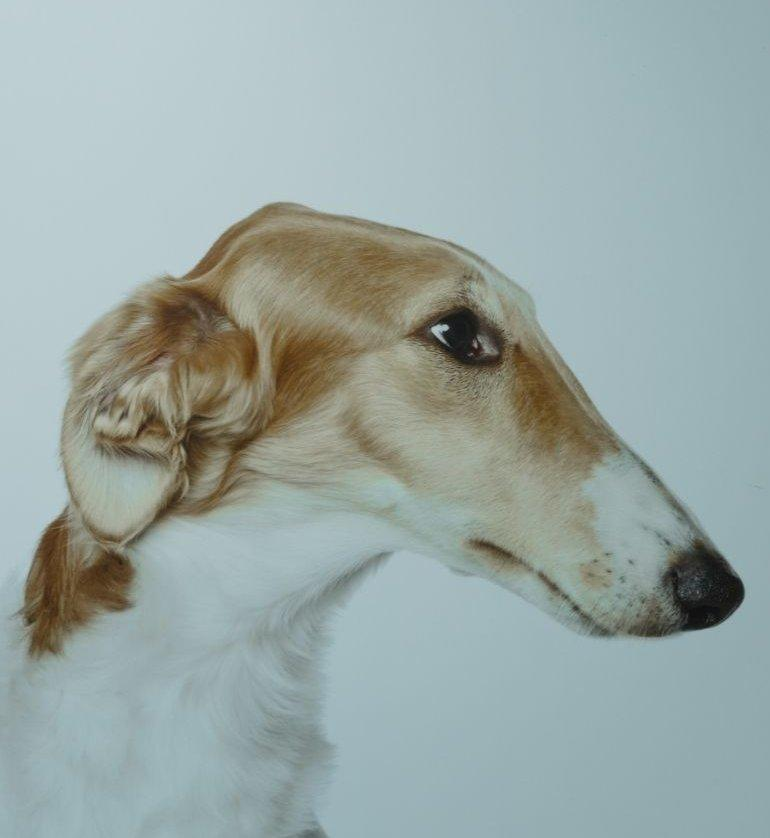 Agár profil