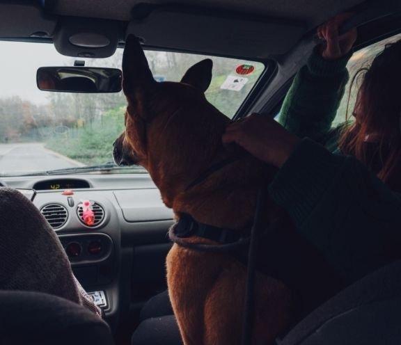 Akadályozzuk meg, hogy kutyánk előre másszon az autóban