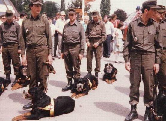 1993-as kép katonai Rottweilerekről