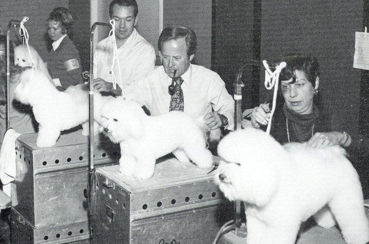 Bichonok 1971-es kiállításon, Forrás: akc.org