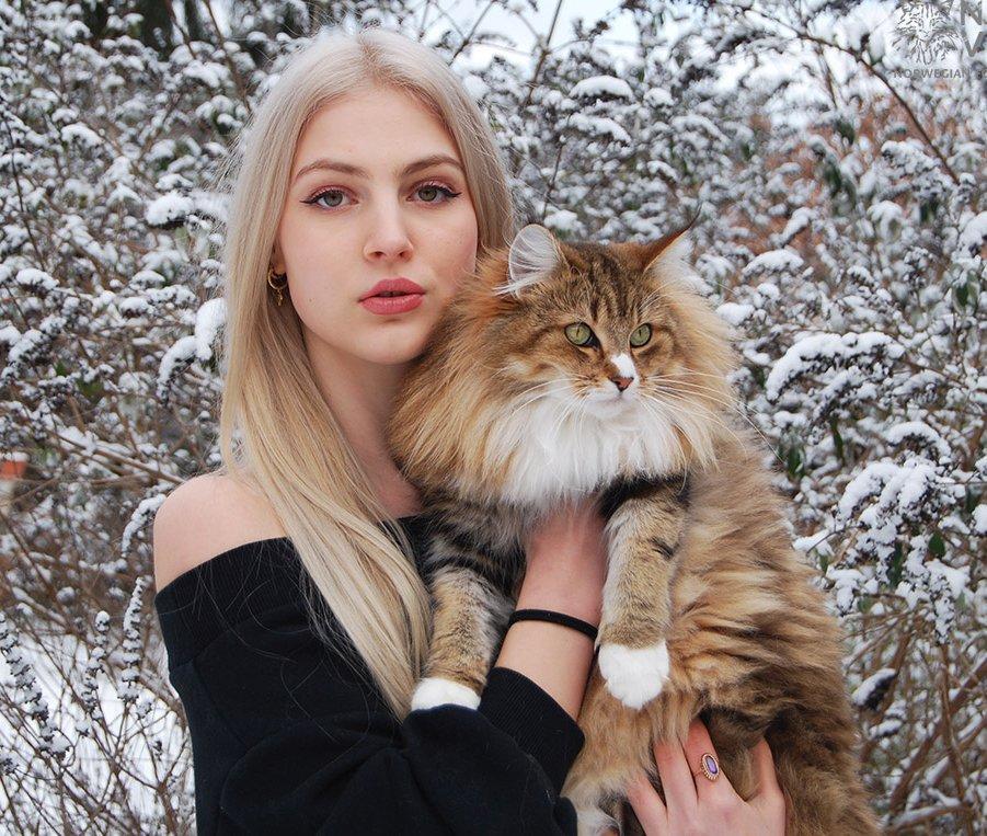 Norvég erdei macska tenyésztő