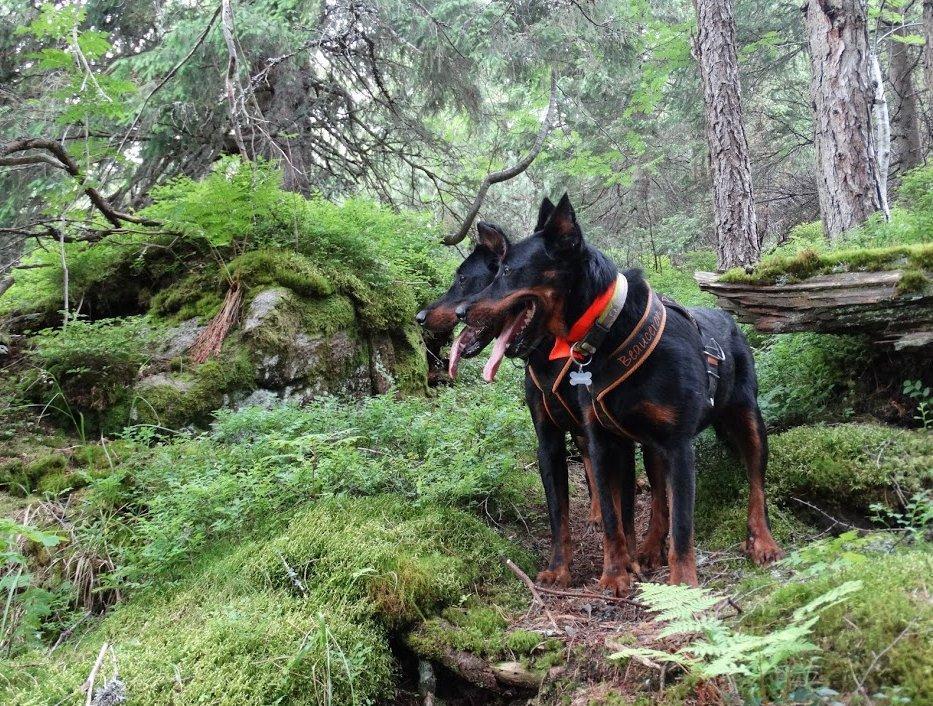 Kutya pár az erdőben