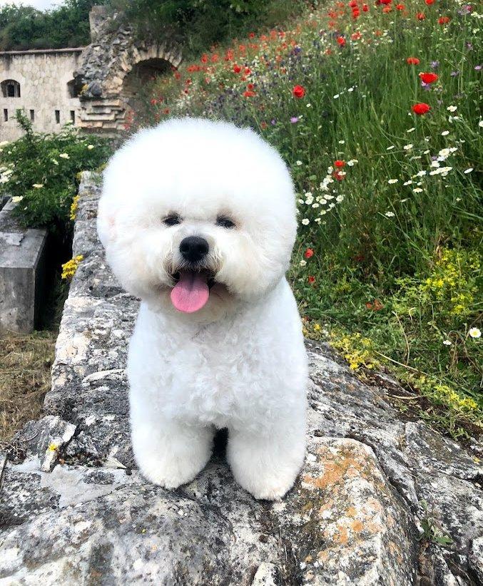 Kis kutya a kő falon