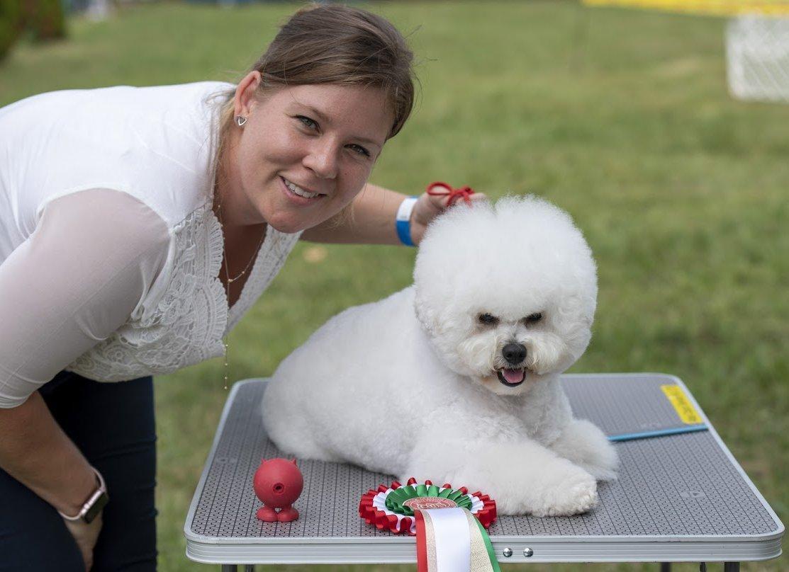 Bichon kis kutya tenyésztőjével