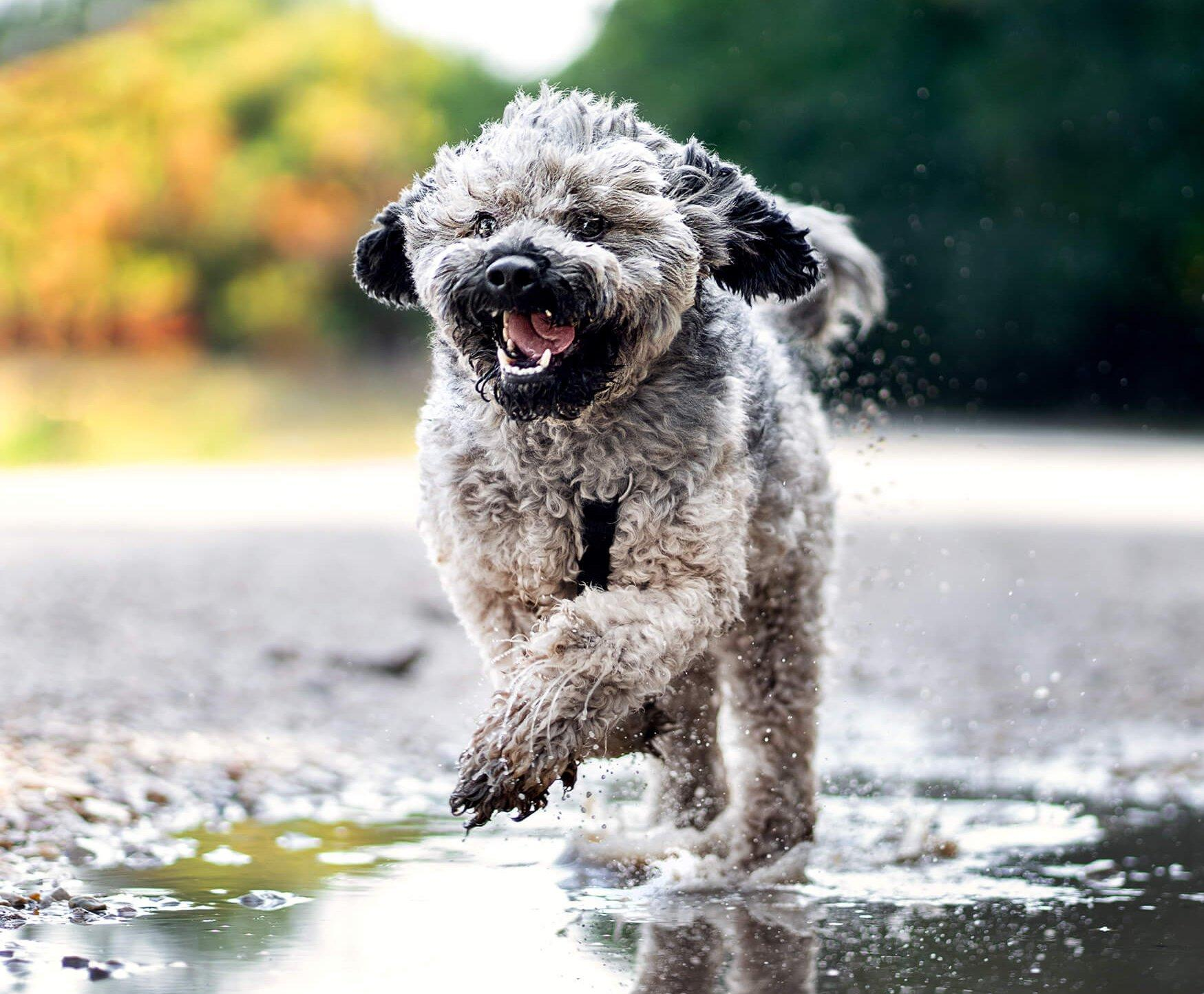 Rohanó kutya