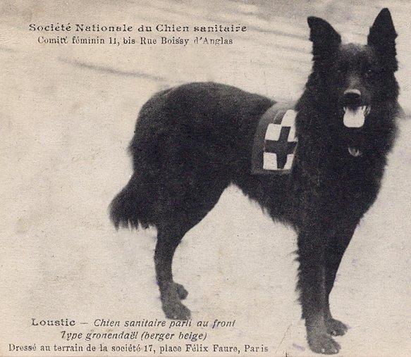 Mentőkutyaként szolgáló Belga juhász a háborúban, forrás: bsca.info