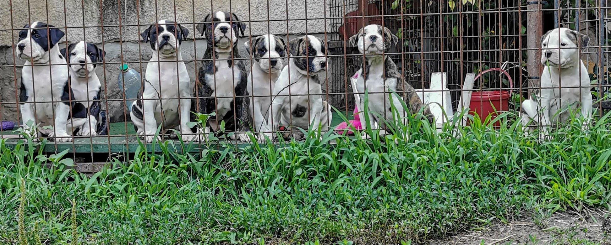 Kölyök kutyák sorba ültetve