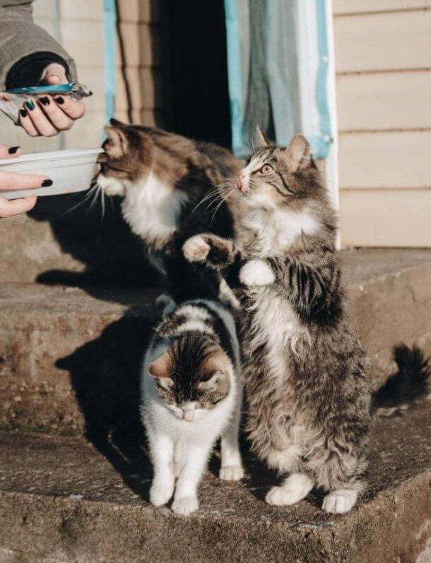 Macska etetés