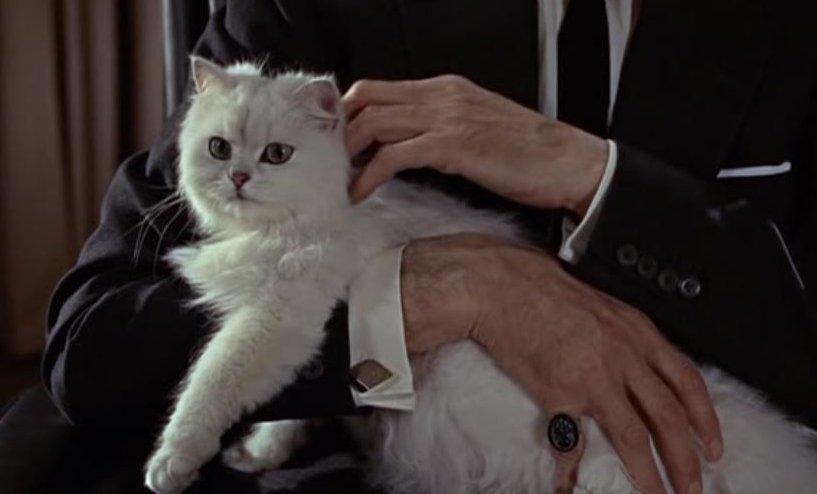 A filmben szereplő macska_forrás: catsonfilm.net