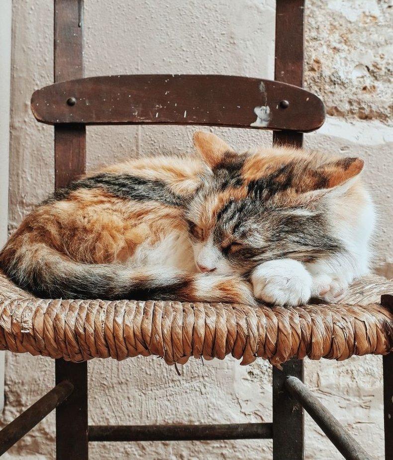 Cica alszik a régi fa széken