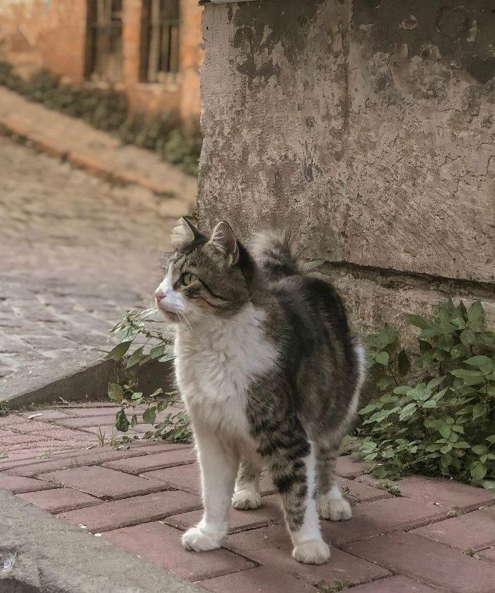 Macska a ház sarkánál nagyon figyel valamit