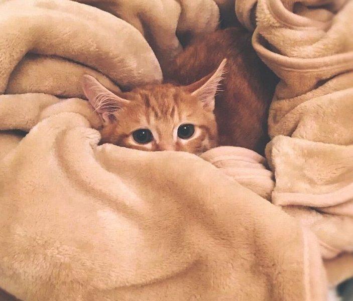 Kölyökmacska takaróban