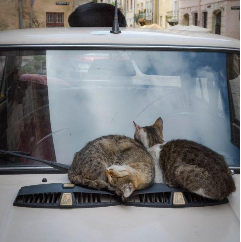 Macska a kocsiban