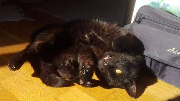 Gyógyult menhelyi cica