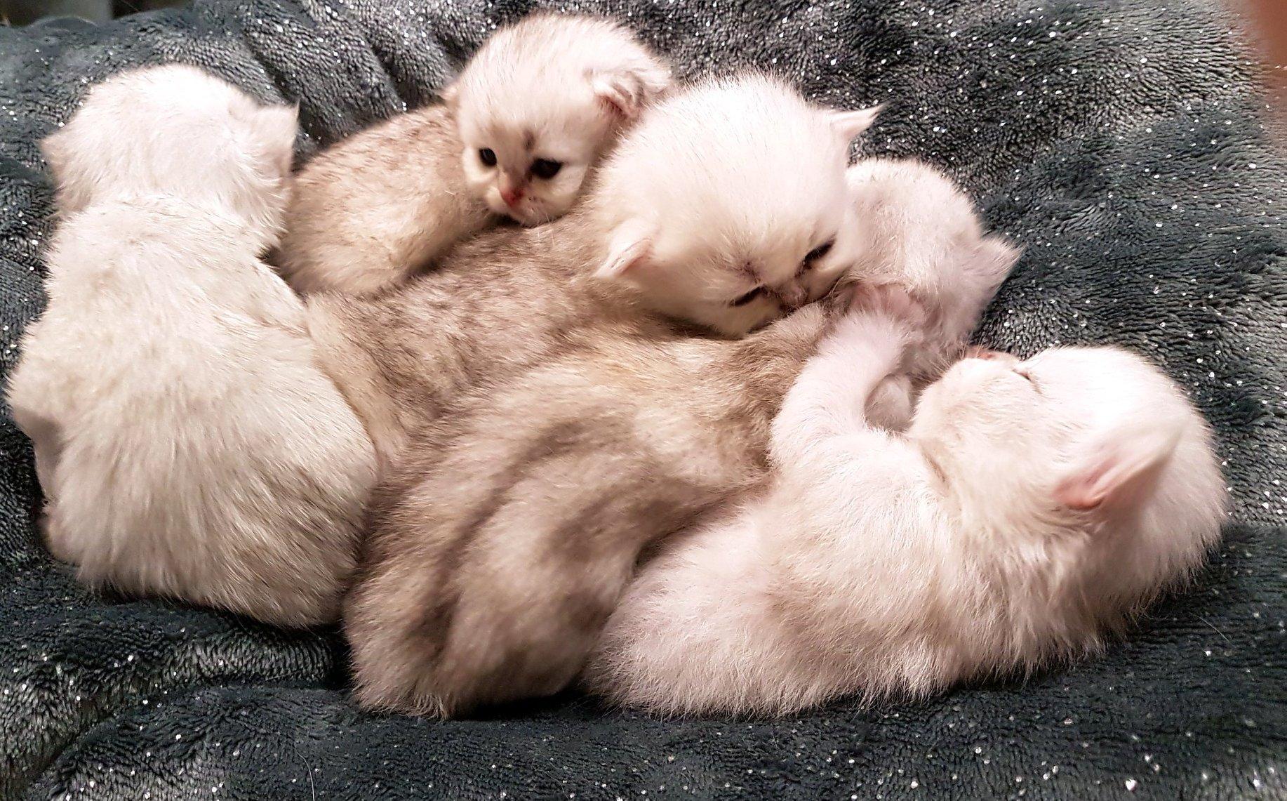 Kölyök cicák