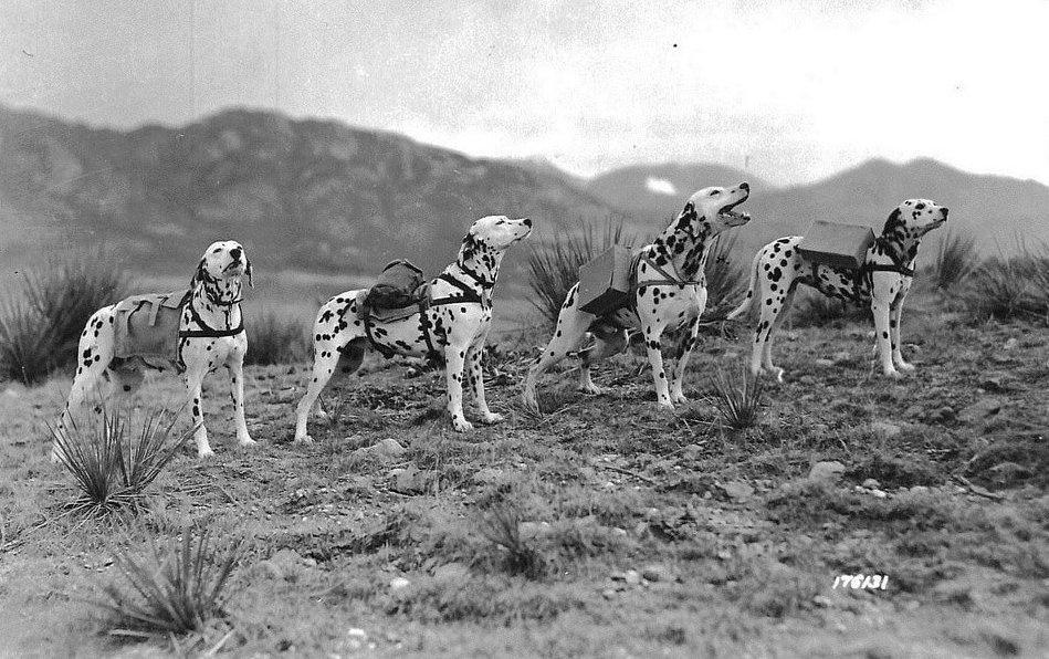 Dalmaták háborúban