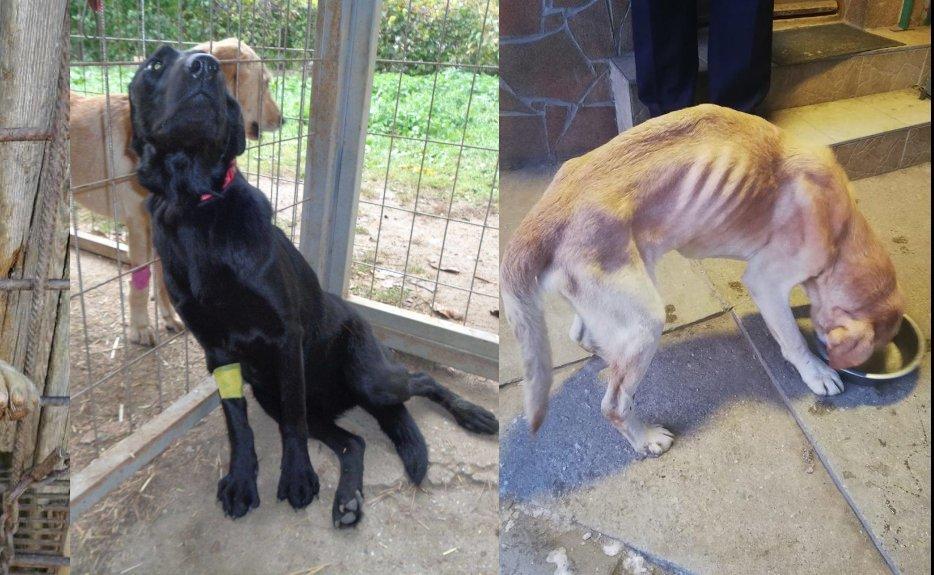 Retriever Rescue labrador mentés
