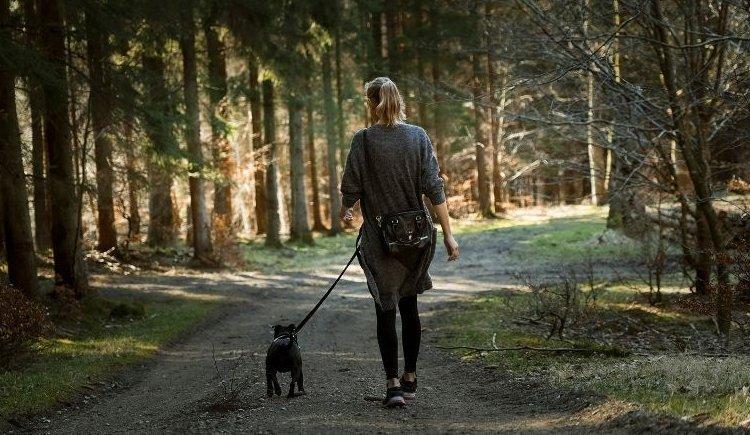 erdei kutya séta