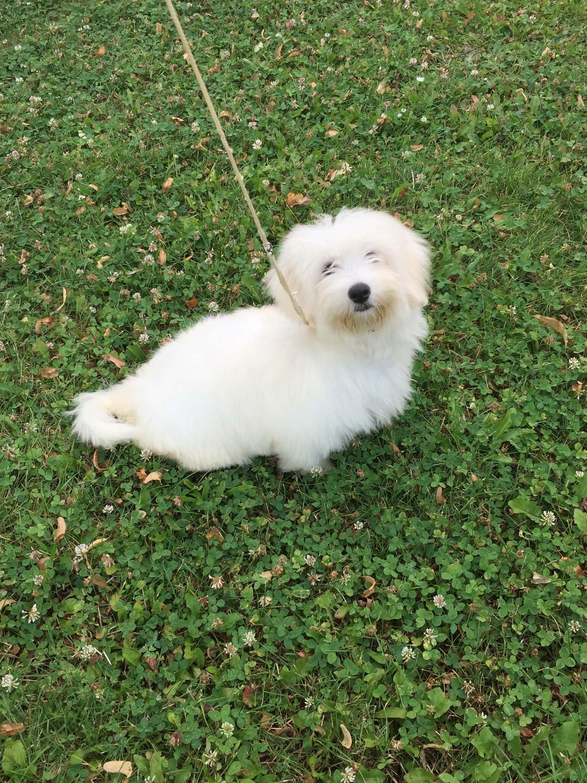 Kis kutya a fűben