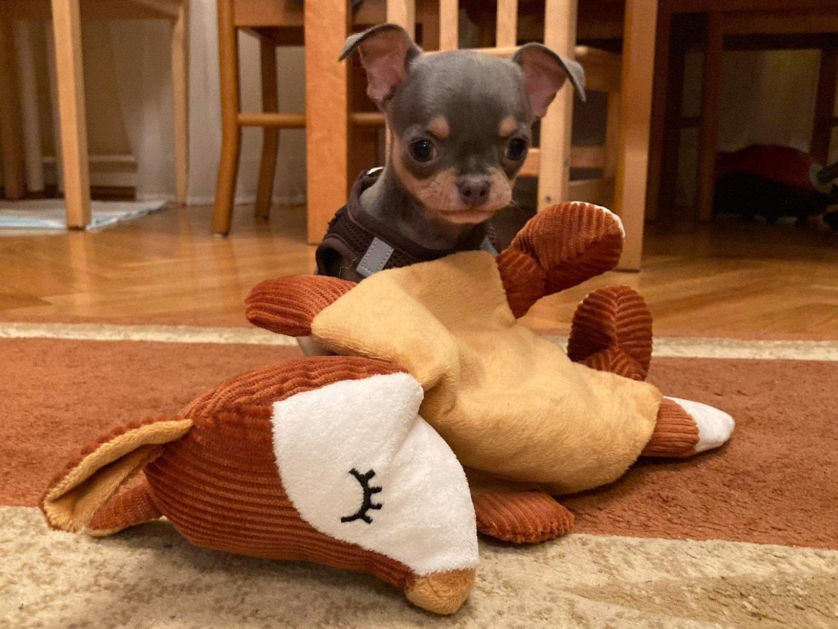 Kis kutya nagy plüss játékkal