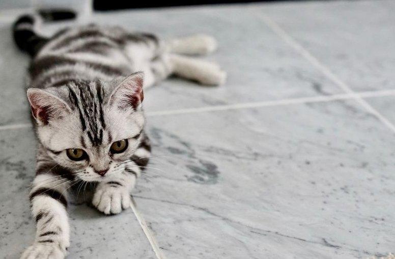fiatal macska