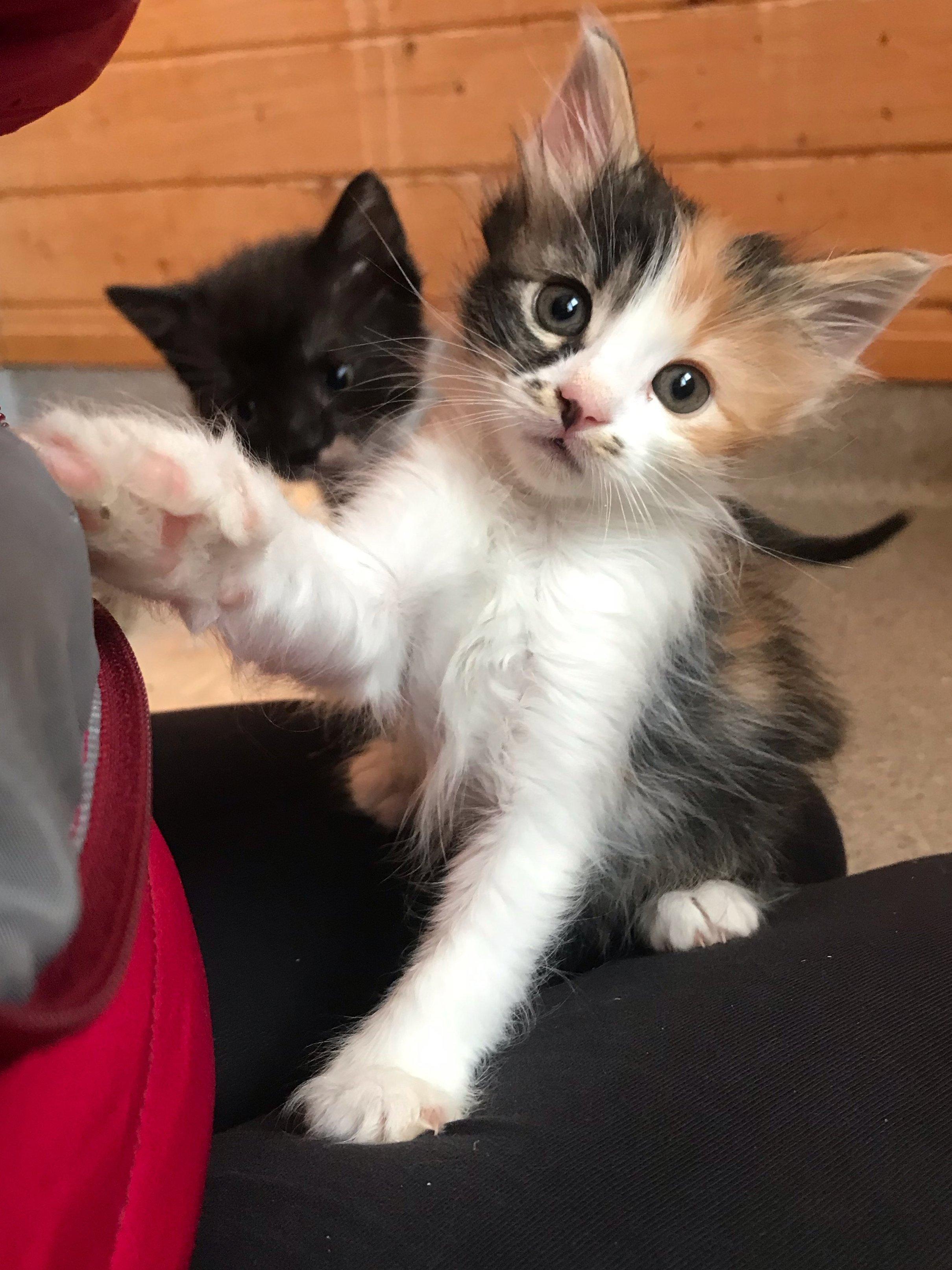 Fiatal macskák