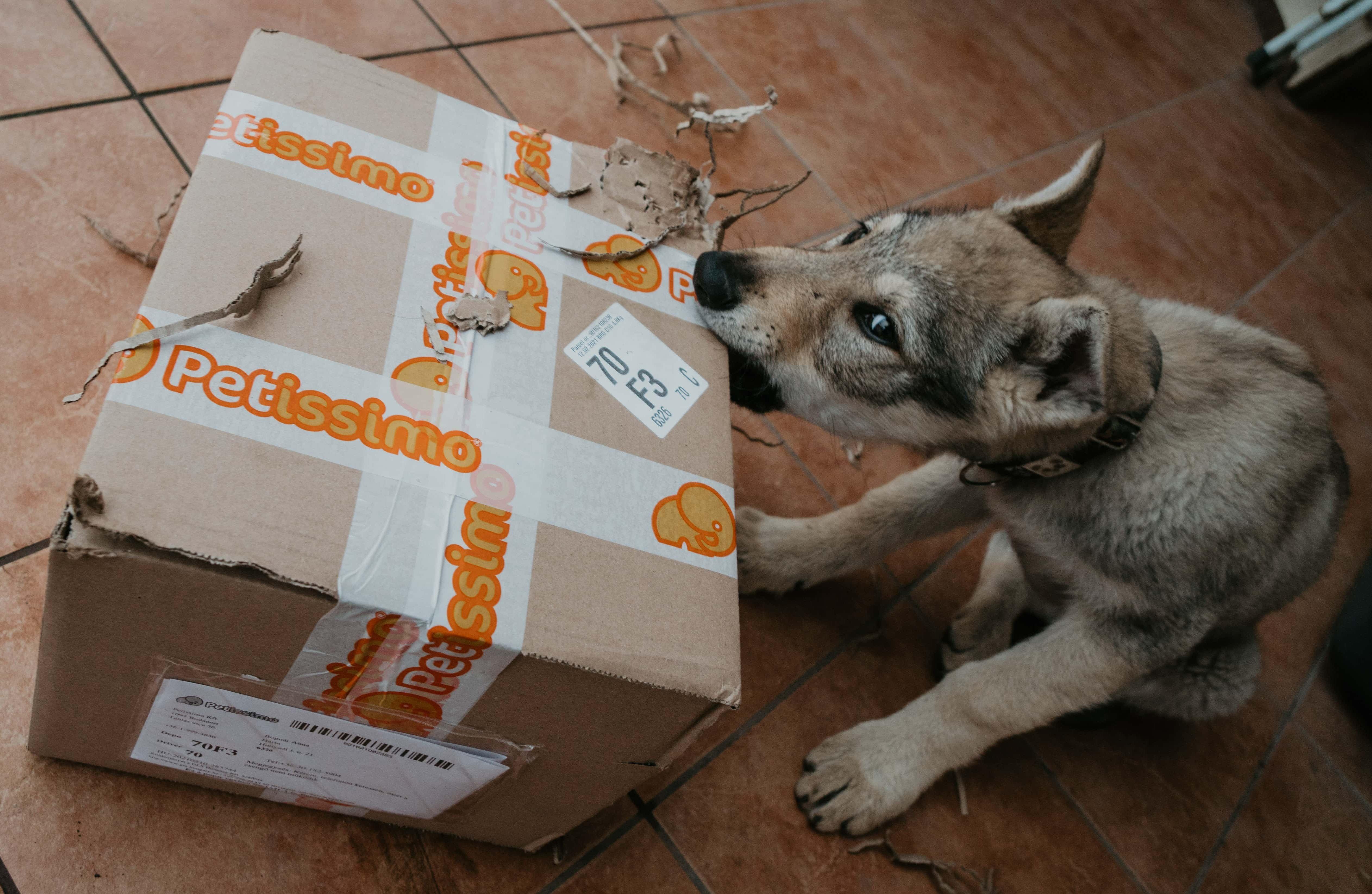 Rongáló kölyök kutya