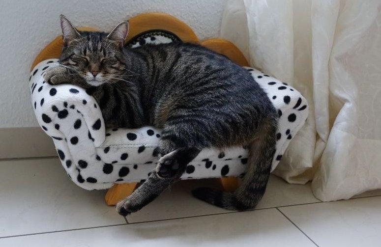 Macska fotelben alvó cirmos