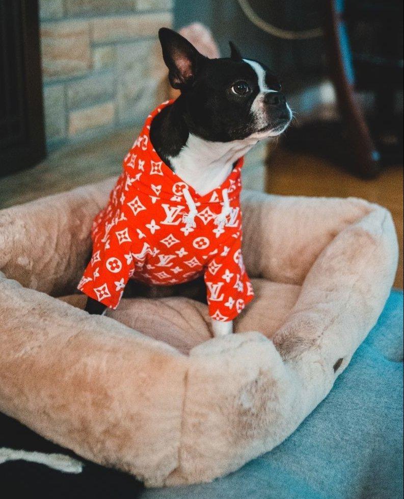 Francia Bulldog pizsamában