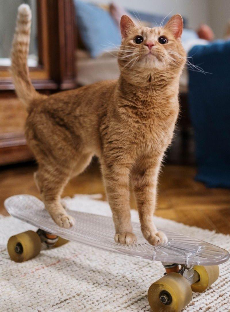 Gördeszkázó macska