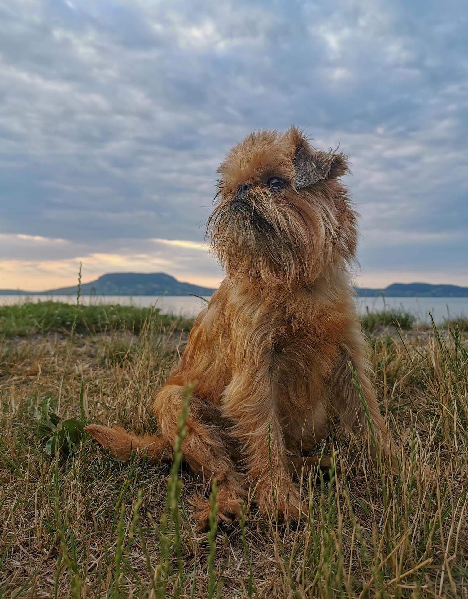 Kis kutya a balaton parton