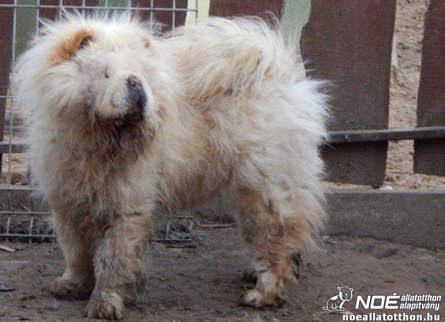 Noé állatotthon által mentett kutyus