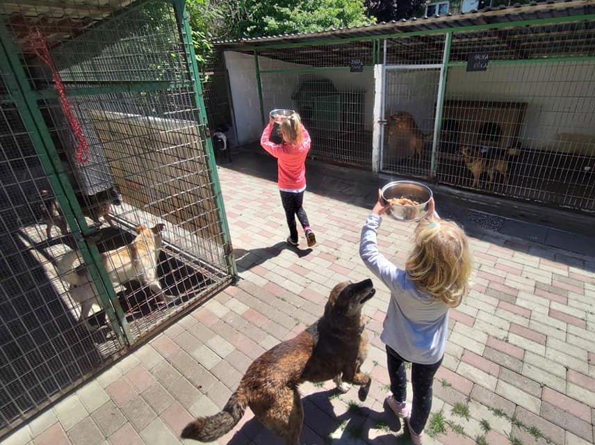 Menhelyi kutyák etetése