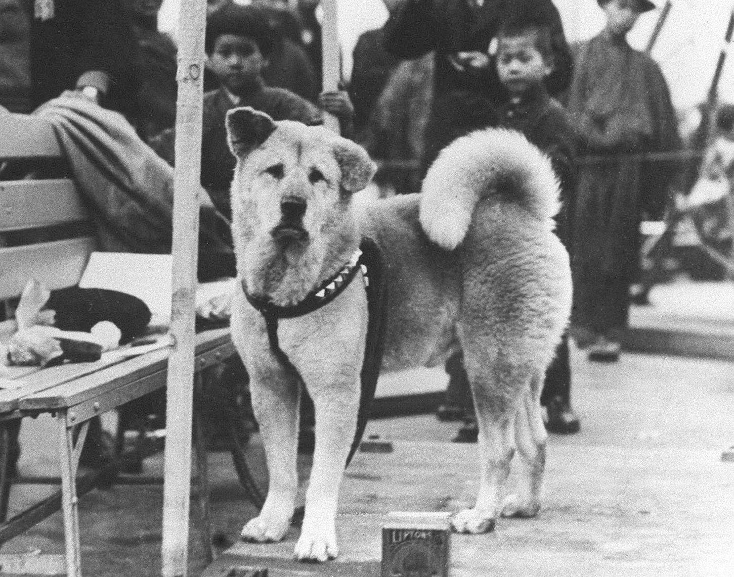 Hachiko a világ egyik legismertebb kutyája