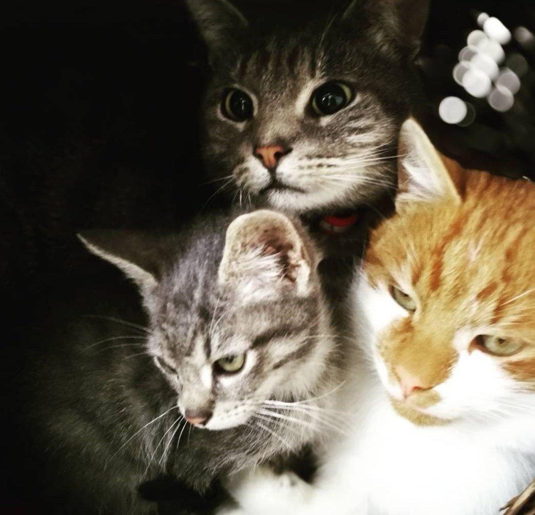 Mentett cicák