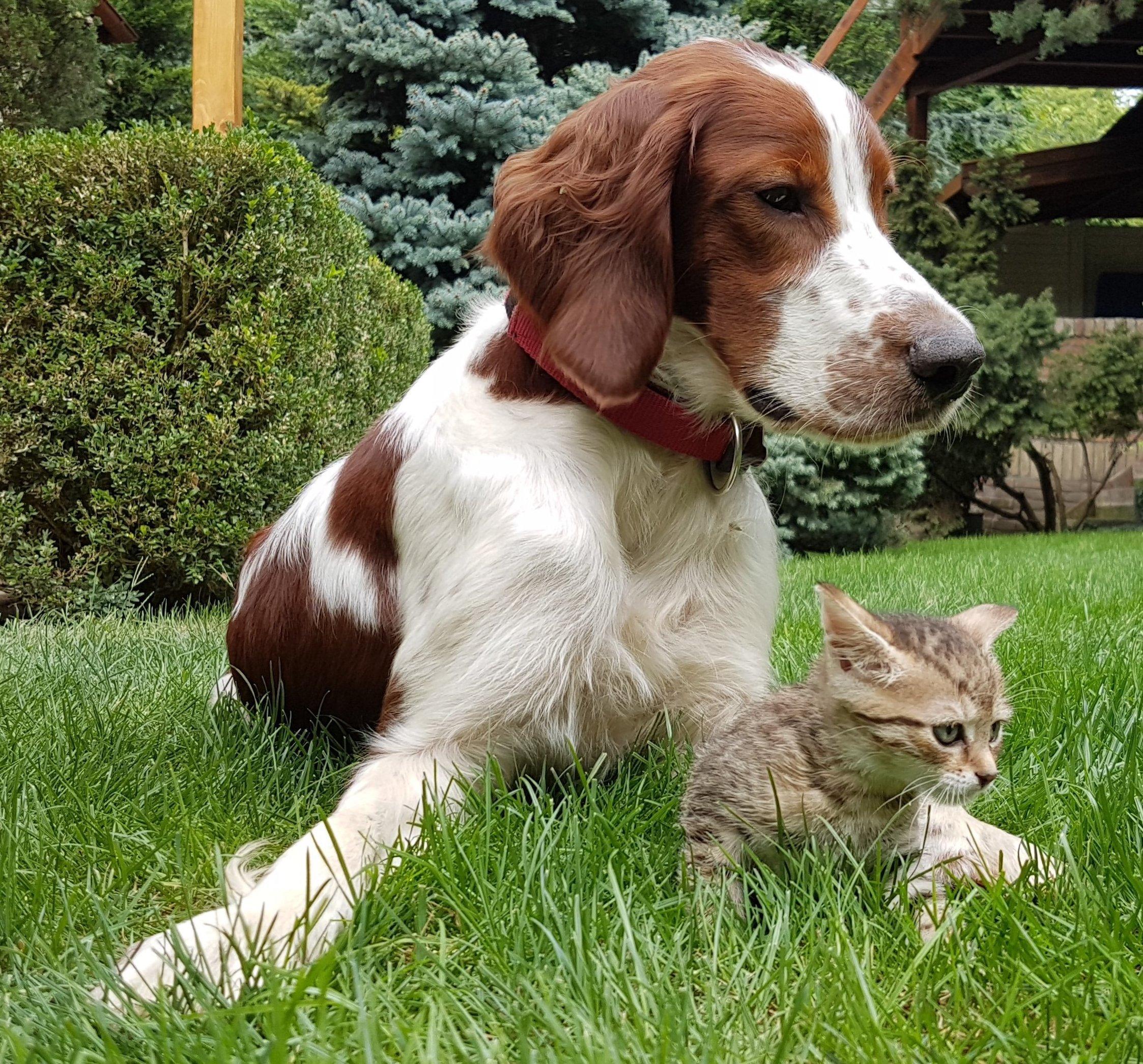 Kis kutya, kis cicával