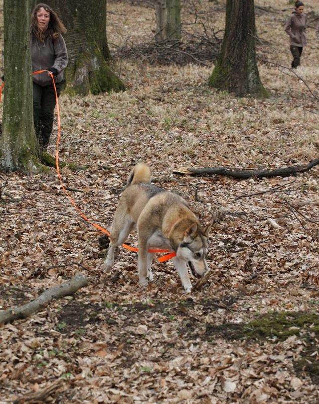 Nyomkövető kutya erdőben
