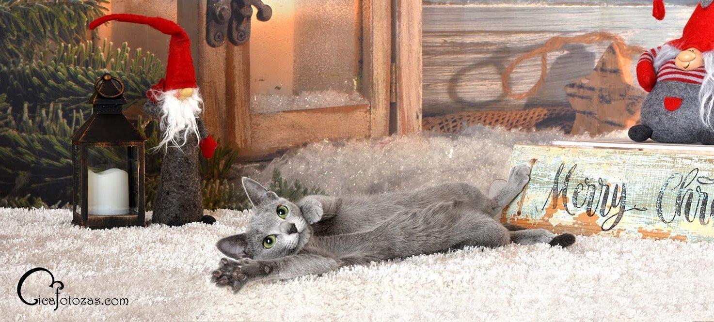 Orosz kék macskás karácsonyi képeslap