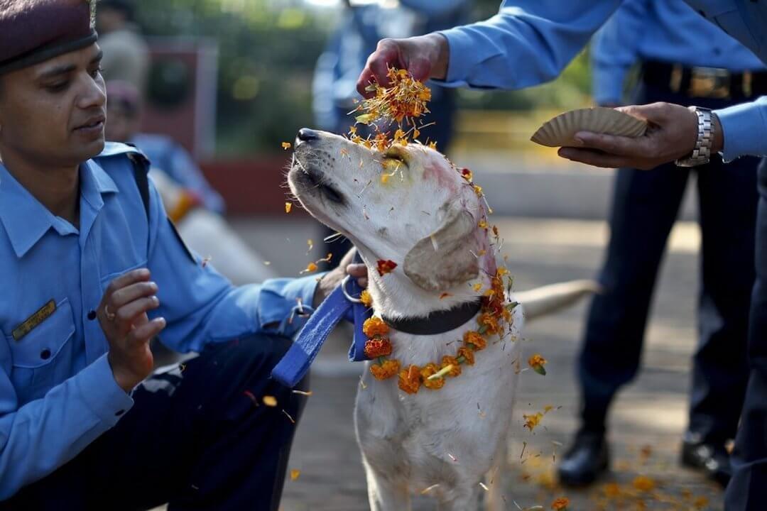 Kathmandui rendőrkutya a fesztiválon, forrás: kathmanduandbeyond.com