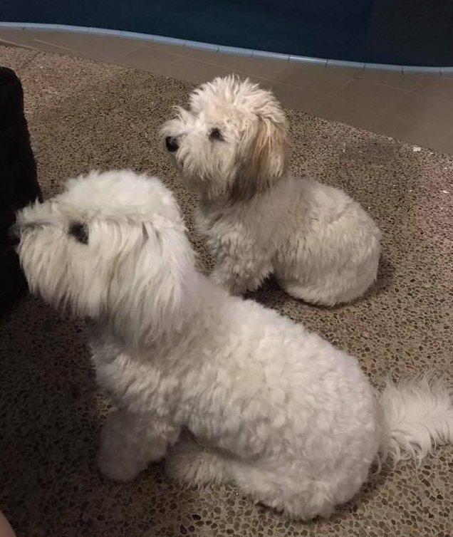Kéregető kutyák