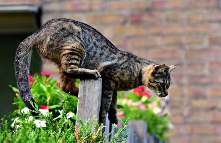Kerítésen átmászó macska