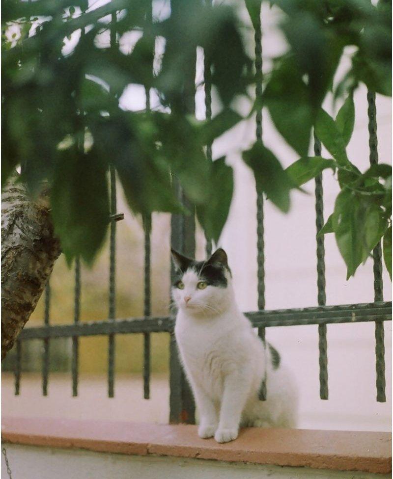 Macska a kerítésen