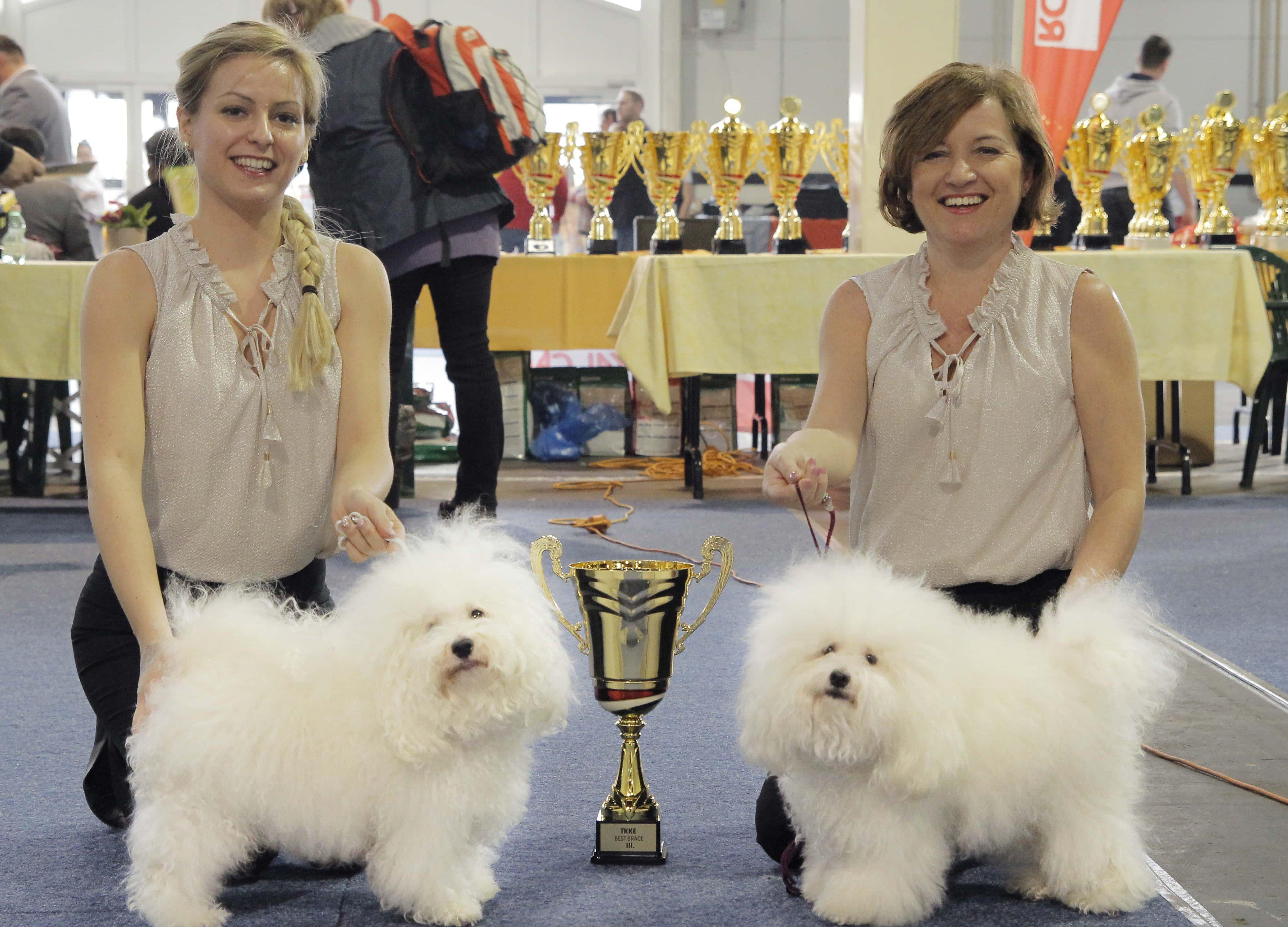 Kiállítás győztes kutyák