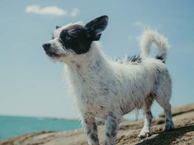 Kis kutya a strandon