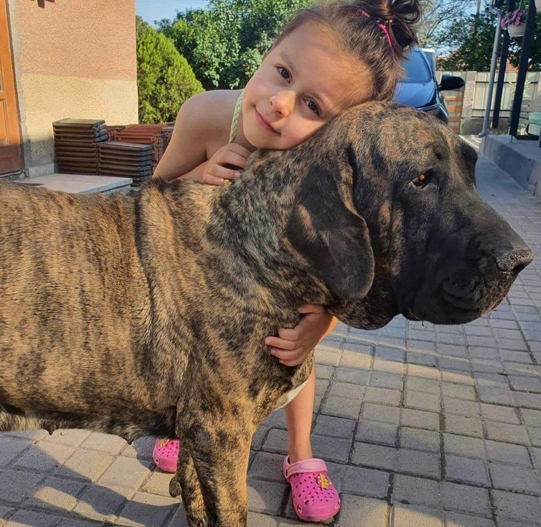 Fila kutya kislánnyal