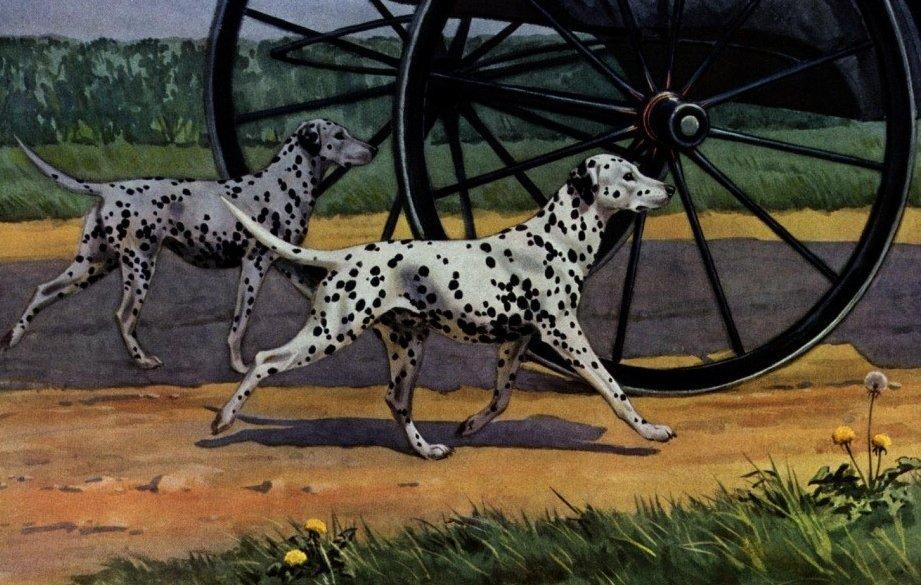 Kocsi kísérő Dalmaták festményen