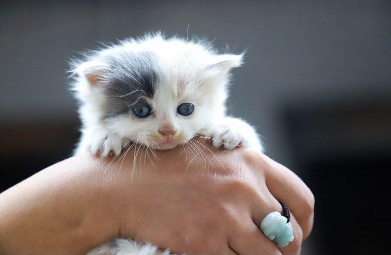 Nagyon fiatal kölyök macska